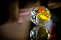 Carnivale - Marble Photograph
