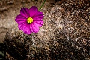 Cosmos and Stone - University of Colorado
