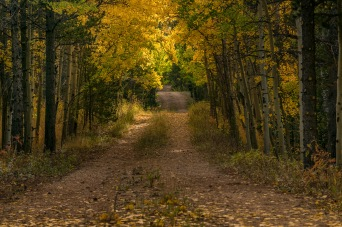 The Road Less Traveled - Boulder County CO