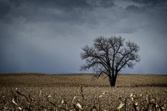 One Tree: Weld County, CO