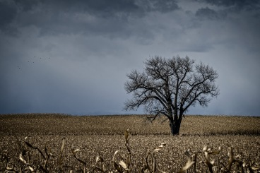 One Tree: Weld County, CO