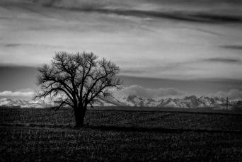Long Winter Light - Dacono, Colorado