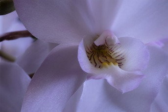 Orchidelirium: Purple