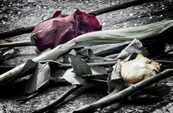 The Rose of Columbine - 4-20-2019